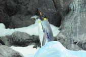 Pinguim colorido preto e branco — Foto Stock