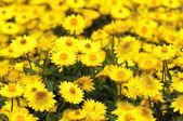 色彩鲜艳的花朵 — 图库照片