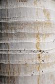 Coconut Tree Trunk — Stock Photo