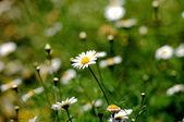 цветки белые цветные — Стоковое фото