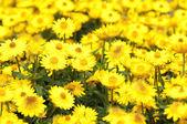 Barevné květy — Stock fotografie