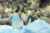 Zwart-wit gekleurde pinguïn — Stockfoto