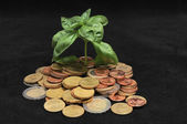 Green Plant and Coins — Stock Photo