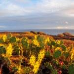 Tenerife South Landscape — Stock Photo