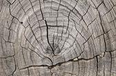 トランクの木目テクスチャ — ストック写真