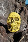 Cabeça de crânio humano vintage antigo — Fotografia Stock