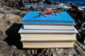 Pomarańczowy kraba na niebieski książki — Zdjęcie stockowe