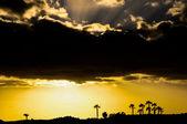 Palm tree sihouette — Stockfoto