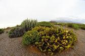 Green Succulent Cactus — Stock fotografie