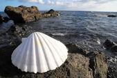 Limestone Sea Shell — Stock Photo