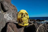 Ancient Vintage Human Skull Head — Foto Stock