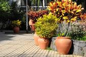 Terracotta Vases — Stock Photo