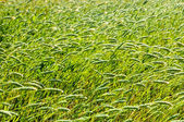 Texture Grass — Stock Photo
