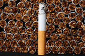 Tobacco Industry — Stock Photo