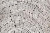 деревянный шаблон текстуры ствола — Стоковое фото