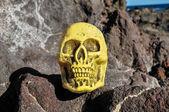 Starověké vinobraní lidská lebka hlavy — Stock fotografie