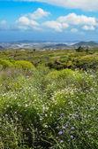 Paisagem de primavera — Fotografia Stock