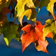 Stock Photo: Fall Foliage