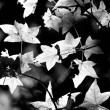 Stock Photo: Shining Leaves