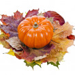Royalty-Free Stock Photo: Pumpkin with Colorful autumn leaves