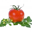 Tomato - Stock Photo