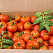 Red tomatoes in cardboard box — Stock Photo
