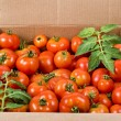 Stock Photo: Red tomatoes in cardboard box