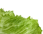 Leaf fresh lettuce isolated on white — Stock Photo