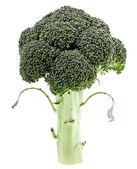 Couve brócolis isolado no fundo branco — Foto Stock