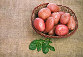 Fresh potatoes in a basket on a sacking — Stock Photo