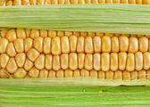 Fondo superficie maíz macro — Foto de Stock