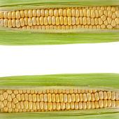 Borda do quadro de orelha de milho com espaço de cópia em branco — Foto Stock