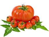 помидоры различных сортов и размеров — Стоковое фото