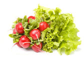 Radish on a white background — Stock Photo
