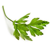 Fresh herb parsley isolated on white — 图库照片
