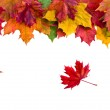 Border frame of colorful autumn leaves isolated on white — Stock Photo #13838932