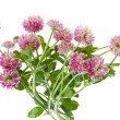 Pink clover isolated on white — Stock Photo #13835699