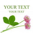 Clover flower card with space for text — Stock Photo