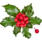 Sprig of European holly ilex christmas decoration isolated on white — Stock Photo