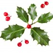 Sprig of European holly ilex christmas decoration isolated on white — Stock Photo