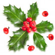 Sprig of European holly ilex christmas decoration isolated on white - Stock Photo