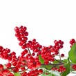 Royalty-Free Stock Photo: Christmas twig holly with red berries