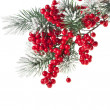 Christmas fir decoration with red berries isolated on white — Stock Photo #13837004