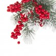 Christmas fir decoration with red berries isolated on white - Stockfoto