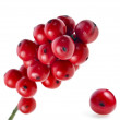 Red berries holly isolated on white — Stock Photo #13837018