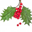 Red berries holly with leaves isolated on white — Stock Photo #13837052
