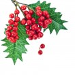 Red berries holly with leaves isolated on white — Stock Photo #13837057