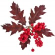 Red berries holly with oak leaves christmas decoration isolated on white — Stock Photo #13837058