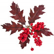 Red berries holly with oak leaves christmas decoration isolated on white — Stock Photo