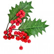 Red berries holly with leaves isolated on white — Stock Photo #13837065